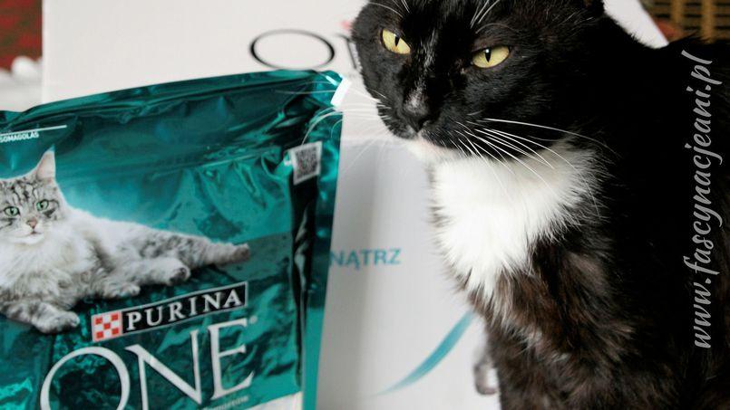 Purina One – czy to karma dla Twojego kota?
