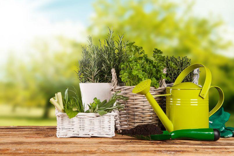 Zielony dom. Najmodniejsze rośliny doniczkowe